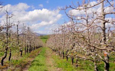 Familie Boerdery word Appel Produsent van wereldgehalte